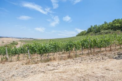 MONTALCINO: CELLAR TO BE RESTORED WITH 10 HA OF VINEYARD FOR SALE, ROSSO DI MONTALCINO, SANT'ANTIMO