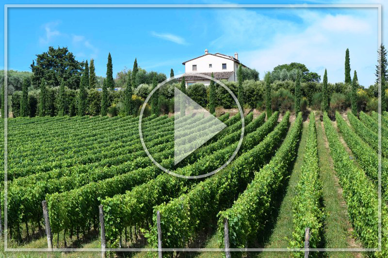 WINERIES & VINEYARDS FOR SALE ITALY EXPERT ADVICE , WINE REAL ESTATE