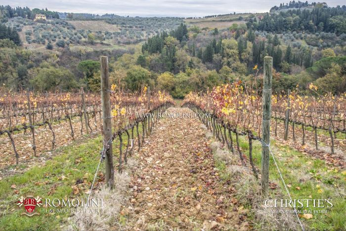 CHIANTI CLASSICO: VINEYARDS AND OLIVE GROVE FOR SALE, SAN CASCIANO