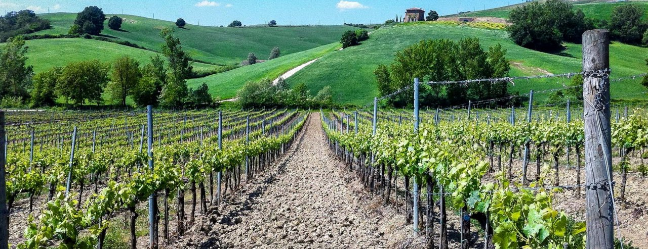 VINEYARDS AND WINERIES FOR SALE IN ITALY