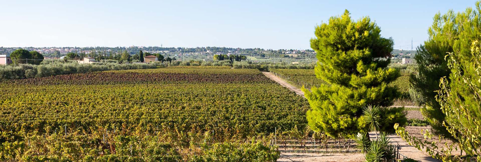 ORGANIC VINEYARDS AND WINERY FOR SALE IN APULIA, ITALY